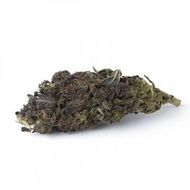 Flowers Farm - Purple 1GR.