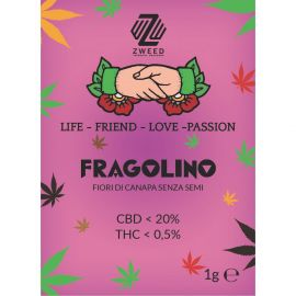 ZWEED - Fragolino 1Gr.